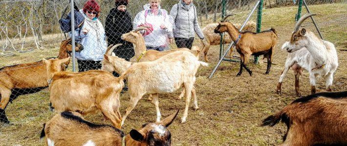 Ženy, co zírají na kozy: JÓGA V KARANTÉNĚ